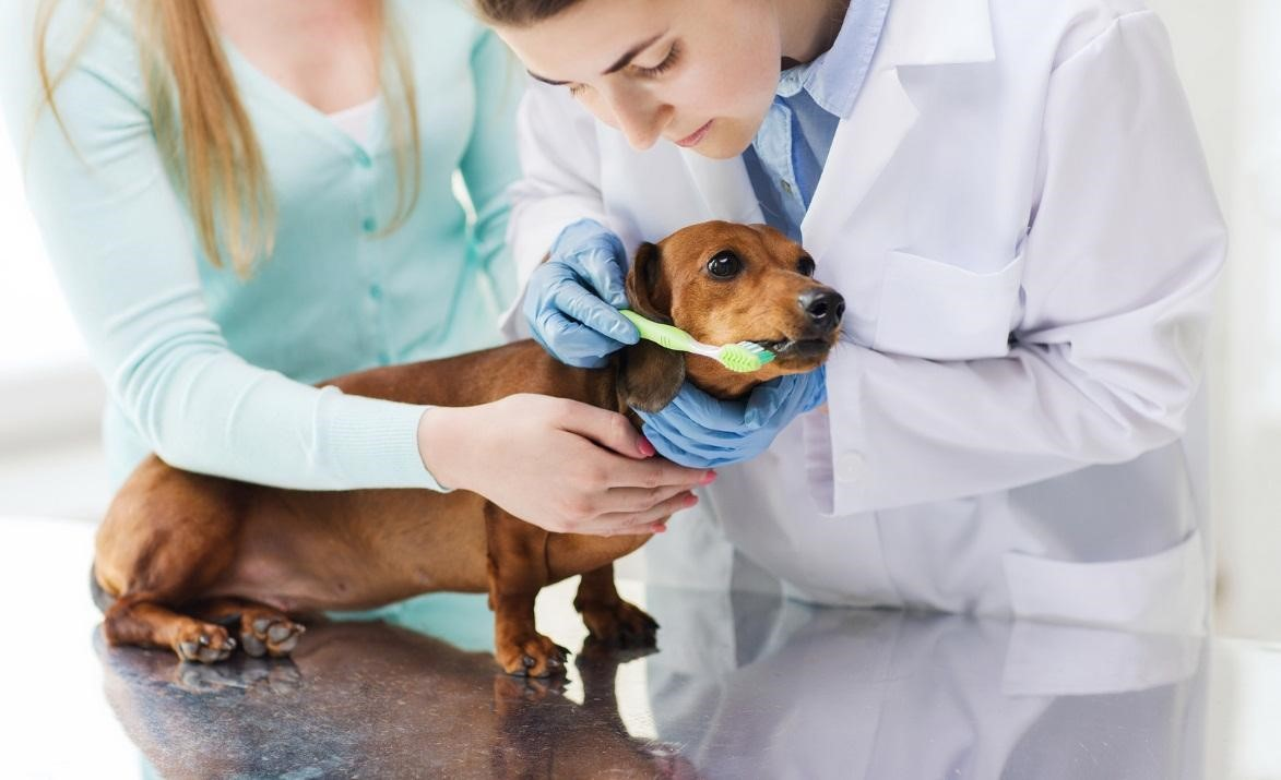 Pet-Dental-Care–Vets-Warn-about-Common-Dental-Pet-Problems