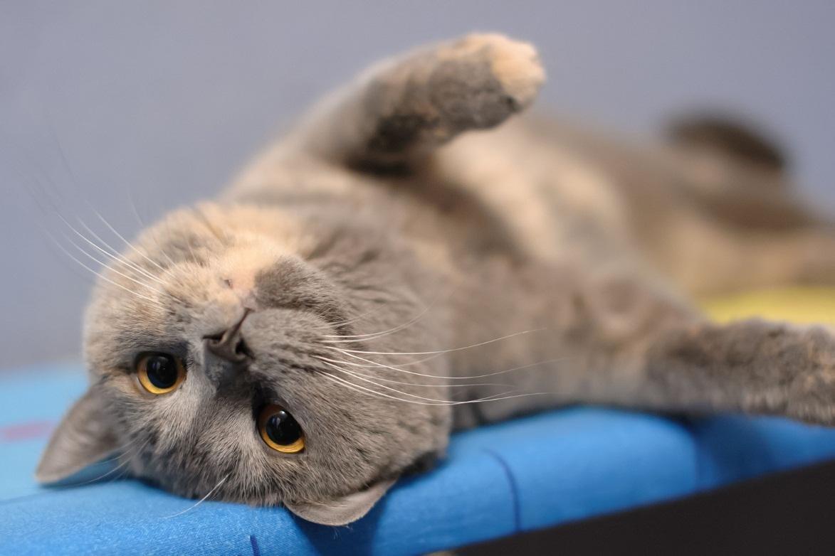 cats vets