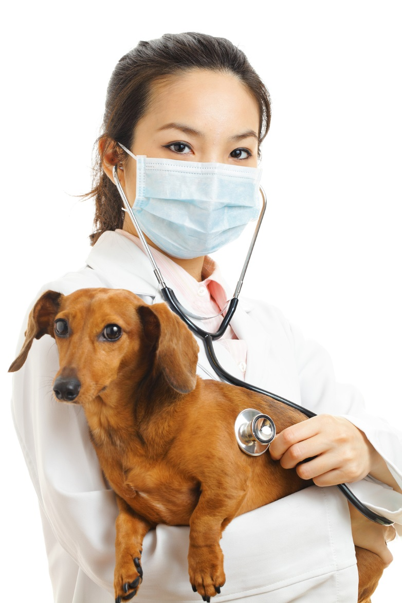 Croydon Vets Share 4 Effective Ways You Can Prevent a Pet Emergency